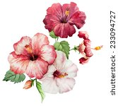 watercolor  flower  hibiscus | Shutterstock . vector #233094727