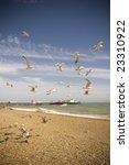Seagulls And Beach In Brighton
