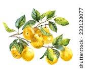 Watercolor Fruit Pear Branch