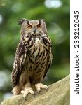 Eurasian Eagle Owl Perched On...