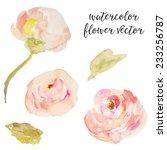 pink watercolor roses vector... | Shutterstock .eps vector #233256787