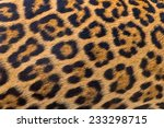 leopard fur background | Shutterstock . vector #233298715