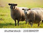 farm animals  sheep grazing on... | Shutterstock . vector #233384059