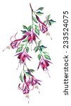 Fuchsias Seamless Pattern