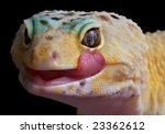A Leopard Gecko Is Licking His...