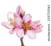 spring flowering branches  pink ... | Shutterstock . vector #233725561