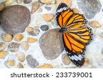 Rocks With Butterfly