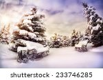Winter Park With Snow Trees An...