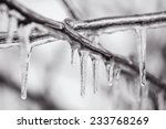 Ice Covered Branches Tree Afte...