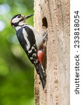 male great spotted woodpecker ...   Shutterstock . vector #233818054