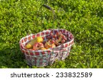 old picnic basket with fruits... | Shutterstock . vector #233832589