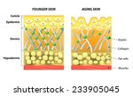 younger skin and aging skin.... | Shutterstock .eps vector #233905045
