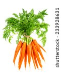 Fresh Carrots With Green Leaves ...
