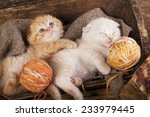Kittens Sleeping With A Ball O...