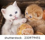 Stock photo kittens sleeping with a ball of wool 233979451