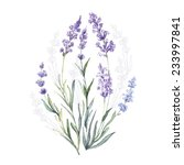 watercolor vector lavender.... | Shutterstock .eps vector #233997841