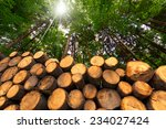 Wooden Logs With Forest On...