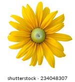A Botanical Susan Flowers ...