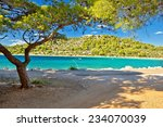 Turquoise Pine Tree Beach Of...