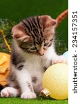 Stock photo cute kitten playing christmas ball on artificial green grass 234157351