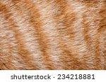 Close Up Of Ginger Cat Fur