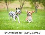 Stock photo dalmatian dog playing with beagle 234232969