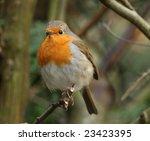 robin | Shutterstock . vector #23423395