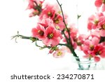 Spring Flowers  Branches Of...