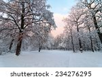 Beautiful Winter Park With...