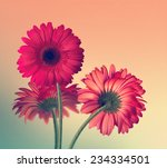 abstract background with... | Shutterstock . vector #234334501