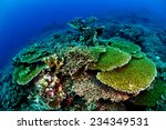 Small photo of Various hard coral reefs in Banda, Indonesia underwater photo. There are bunch of plate hard coral Acropora hyacinthus.