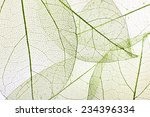 decorative skeleton leaves... | Shutterstock . vector #234396334