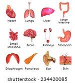 human organs | Shutterstock . vector #234420085