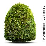 green plant isolated on white | Shutterstock . vector #23445658