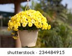 Flower Pot With Yellow...