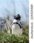 jackass penguins at boulders... | Shutterstock . vector #234534589