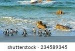 walking  african penguins ... | Shutterstock . vector #234589345