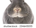 Grey Rabbit's Nose  Cheeks And...