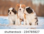 Three Puppies Sitting On The...