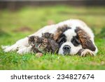 Stock photo saint bernard puppy with three little kittens 234827674