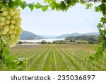 vineyards over lake vineyards... | Shutterstock . vector #235036897