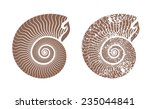 seashell nautilus vector icon illustration
