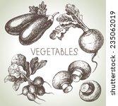 hand drawn sketch vegetable set.... | Shutterstock .eps vector #235062019