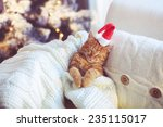 Lovable Ginger Cat Wearing...