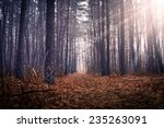 autumn forrest with rays of the ... | Shutterstock . vector #235263091