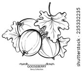 gooseberry. vector illustration ... | Shutterstock .eps vector #235332235