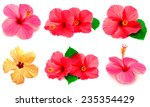 collection of colored hibiscus... | Shutterstock . vector #235354429