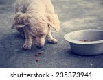 Dry Food And The Dog