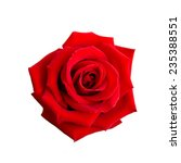 Stock photo red rose isolated on white background 235388551