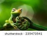 tree frog hypsiboas punctatus.... | Shutterstock . vector #235473541